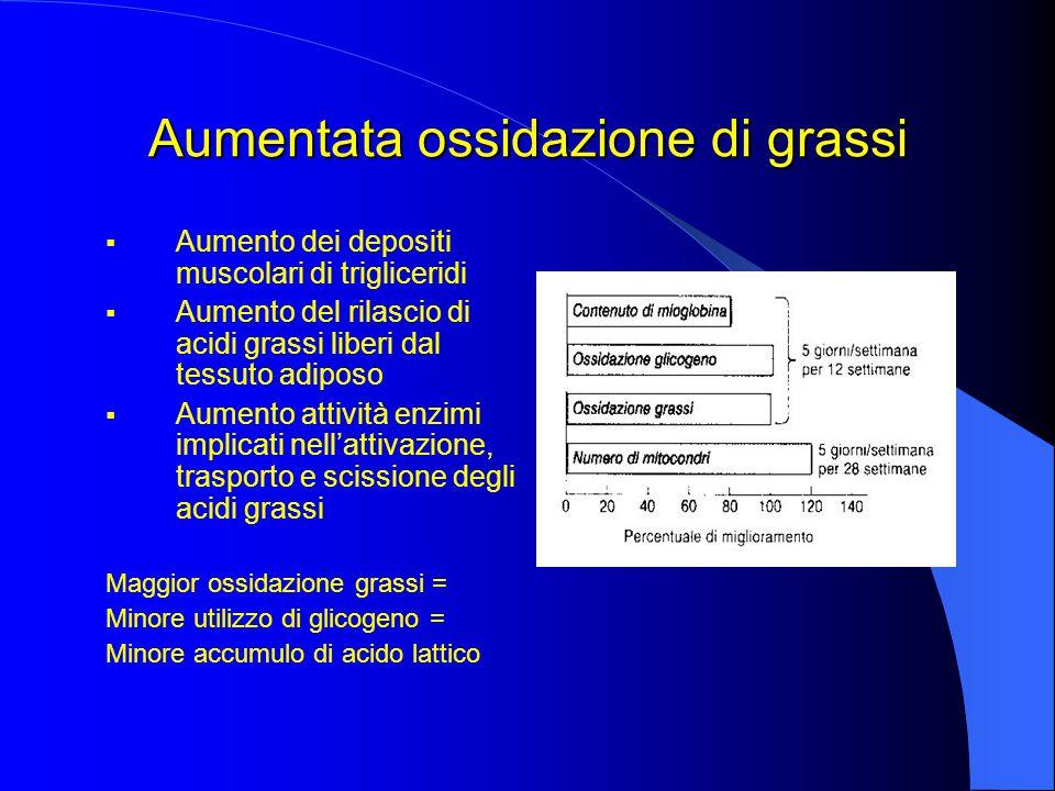 Aumentata ossidazione di grassi  Aumento dei depositi muscolari di trigliceridi  Aumento del rilascio di acidi grassi liberi dal tessuto adiposo  Aumento attività enzimi implicati nell'attivazione, trasporto e scissione degli acidi grassi Maggior ossidazione grassi = Minore utilizzo di glicogeno = Minore accumulo di acido lattico