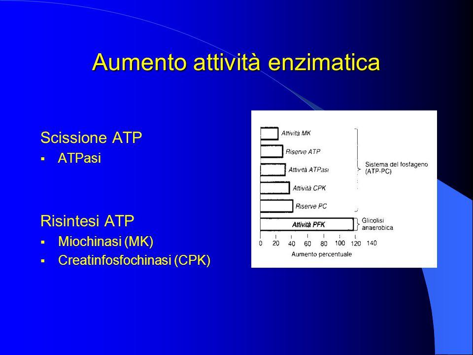 Aumento attività enzimatica Scissione ATP  ATPasi Risintesi ATP  Miochinasi (MK)  Creatinfosfochinasi (CPK)