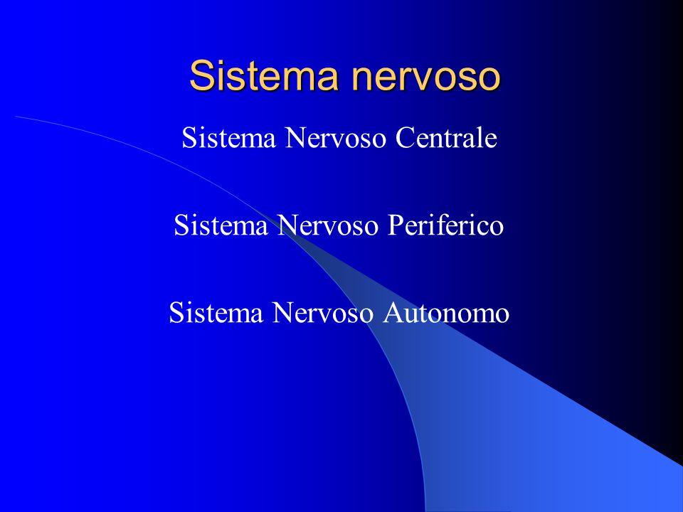 Sistema nervoso Sistema Nervoso Centrale Sistema Nervoso Periferico Sistema Nervoso Autonomo