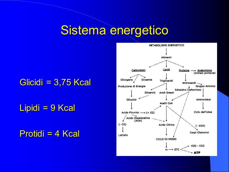 Sistema energetico Glicidi = 3,75 Kcal Lipidi = 9 Kcal Protidi = 4 Kcal