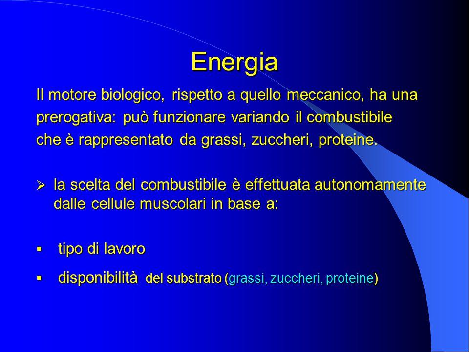 Energia Il motore biologico, rispetto a quello meccanico, ha una prerogativa: può funzionare variando il combustibile che è rappresentato da grassi, zuccheri, proteine.
