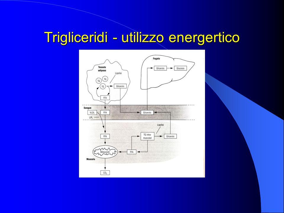 Trigliceridi - utilizzo energertico