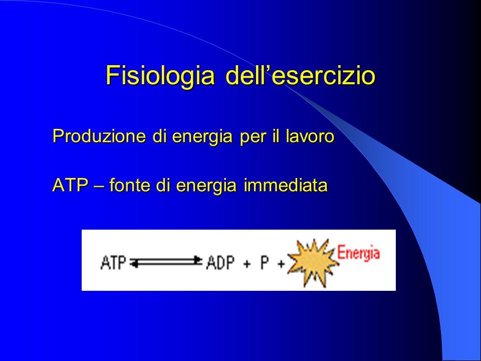 Fisiologia dell'esercizio Produzione di energia per il lavoro ATP – fonte di energia immediata
