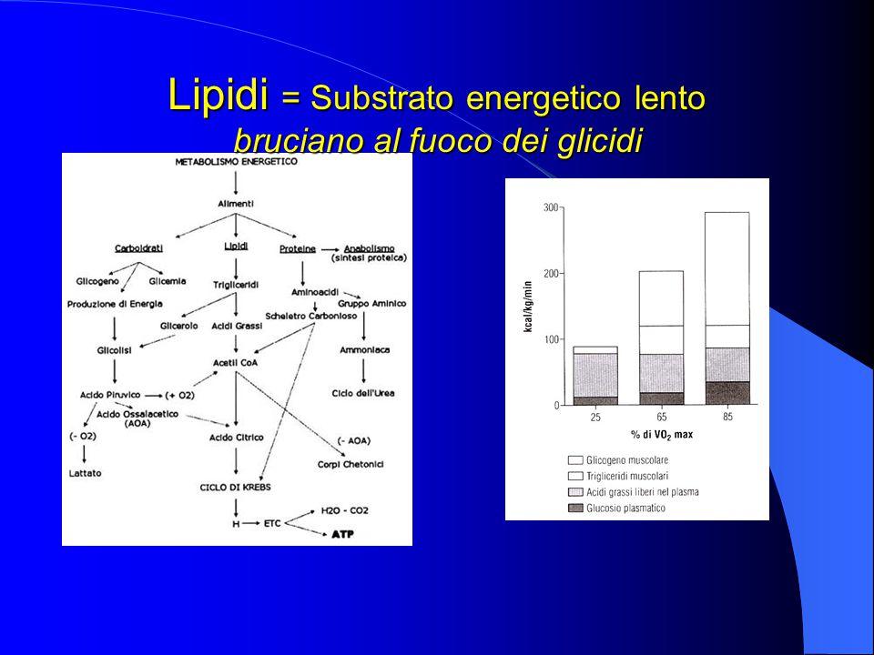 Lipidi = Substrato energetico lento bruciano al fuoco dei glicidi