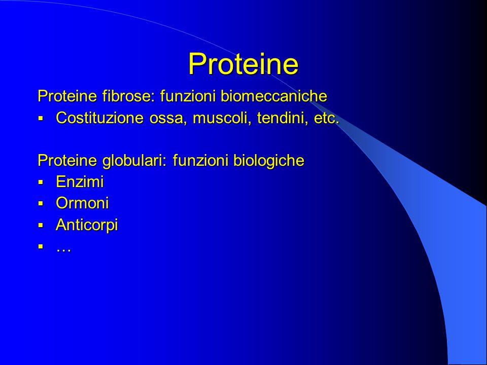 Proteine Proteine fibrose: funzioni biomeccaniche  Costituzione ossa, muscoli, tendini, etc.