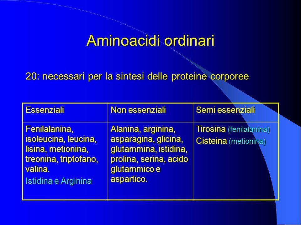 Aminoacidi ordinari 20: necessari per la sintesi delle proteine corporee Essenziali Non essenziali Semi essenziali Fenilalanina, isoleucina, leucina, lisina, metionina, treonina, triptofano, valina.