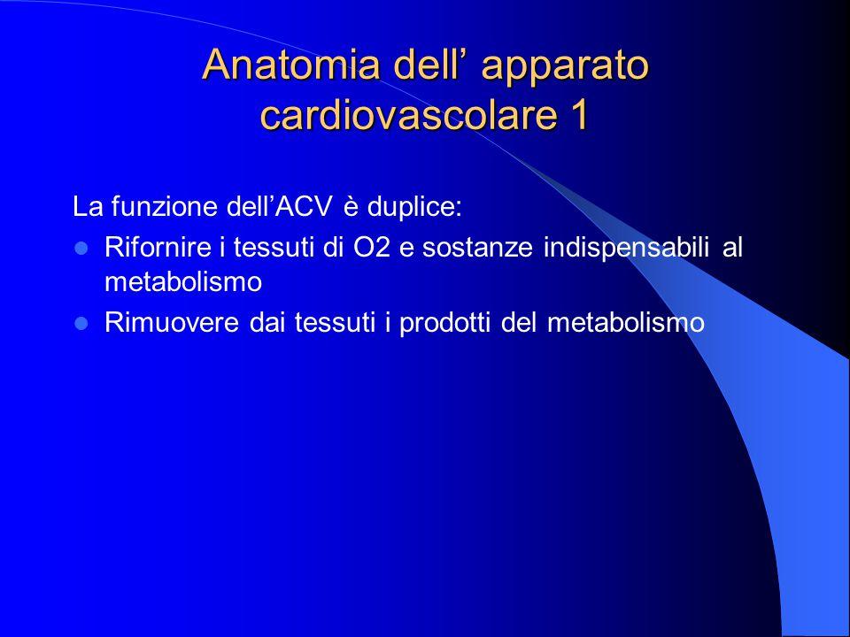 Anatomia dell' apparato cardiovascolare 1 La funzione dell'ACV è duplice: Rifornire i tessuti di O2 e sostanze indispensabili al metabolismo Rimuovere dai tessuti i prodotti del metabolismo