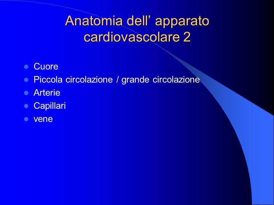 Anatomia dell' apparato cardiovascolare 2 Cuore Piccola circolazione / grande circolazione Arterie Capillari vene
