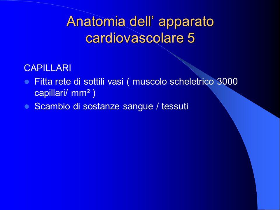 Anatomia dell' apparato cardiovascolare 5 CAPILLARI Fitta rete di sottili vasi ( muscolo scheletrico 3000 capillari/ mm² ) Scambio di sostanze sangue / tessuti