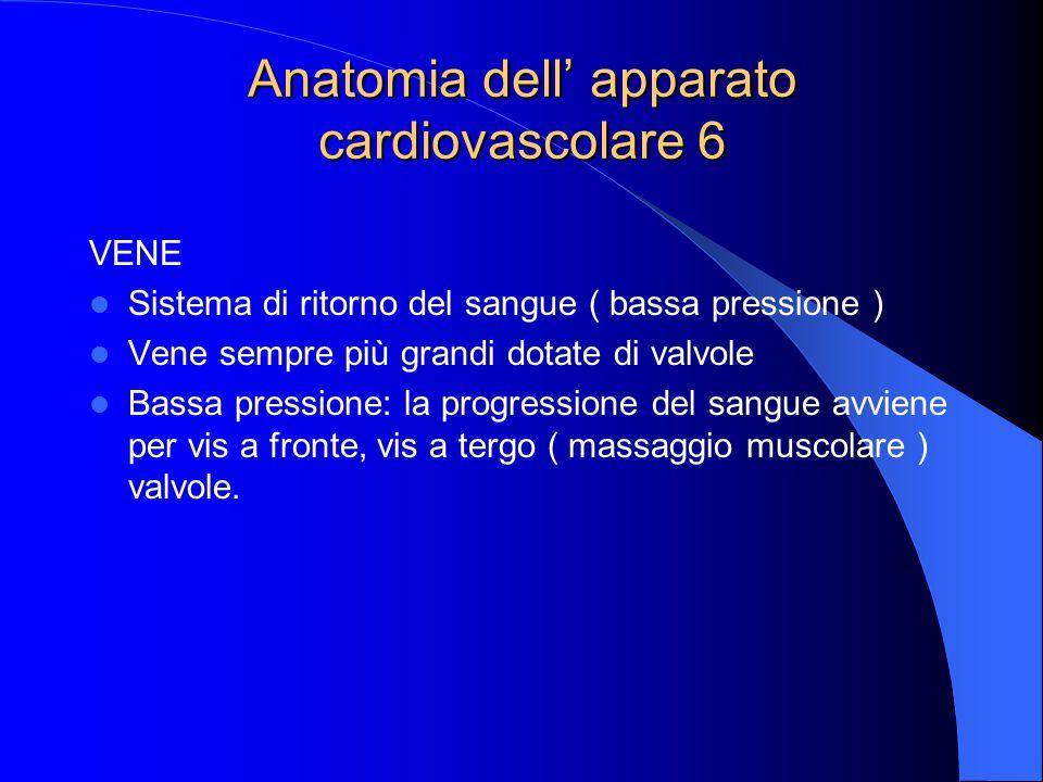 Anatomia dell' apparato cardiovascolare 6 VENE Sistema di ritorno del sangue ( bassa pressione ) Vene sempre più grandi dotate di valvole Bassa pressione: la progressione del sangue avviene per vis a fronte, vis a tergo ( massaggio muscolare ) valvole.