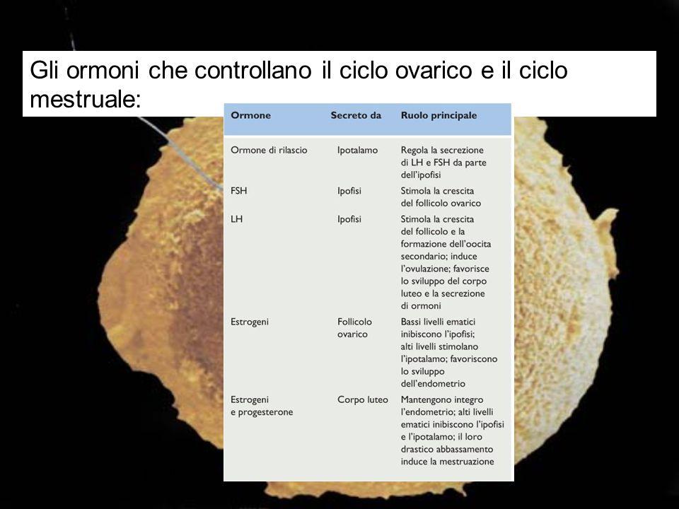 Tabella 25.5 Gli ormoni che controllano il ciclo ovarico e il ciclo mestruale: