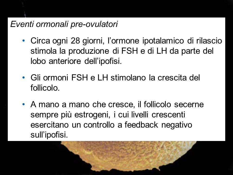 Eventi ormonali pre-ovulatori Circa ogni 28 giorni, l'ormone ipotalamico di rilascio stimola la produzione di FSH e di LH da parte del lobo anteriore
