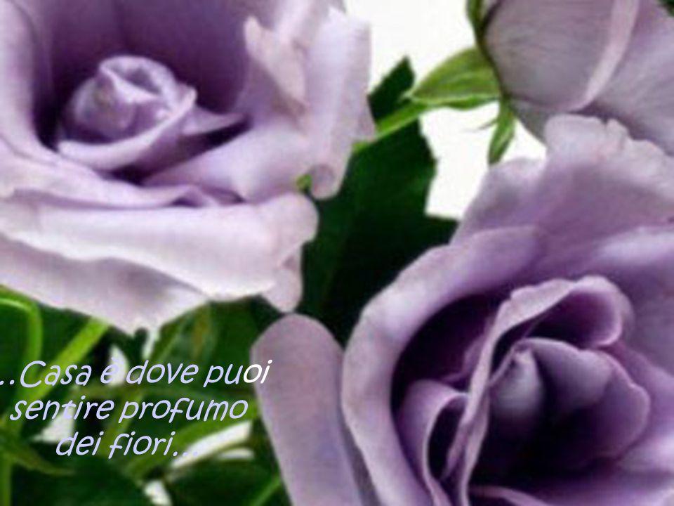 …Casa è dove puoi sentire profumo dei fiori…