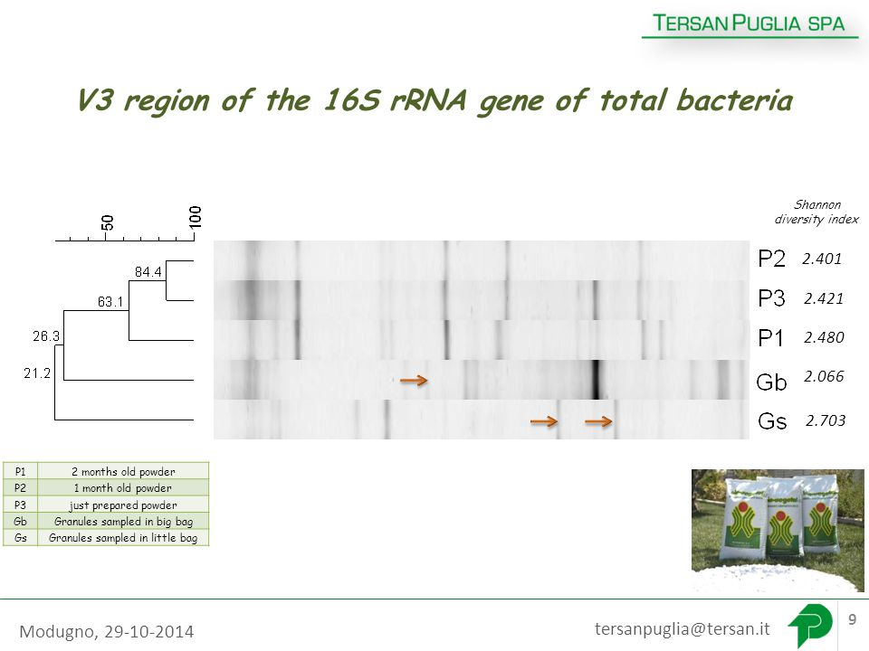 V3 region of the 16S rRNA gene of total bacteria community tersanpuglia@tersan.it 9 P12 months old powder P21 month old powder P3just prepared powder GbGranules sampled in big bag GsGranules sampled in little bag 2.480 2.703 2.066 2.421 2.401 Shannon diversity index Modugno, 29-10-2014