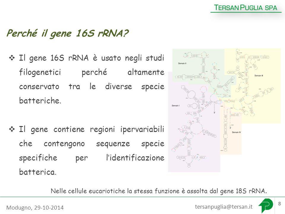 tersanpuglia@tersan.it 8 Perché il gene 16S rRNA.