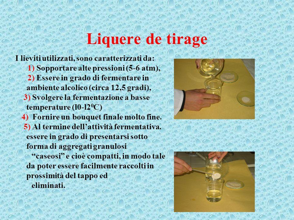 Liquere de tirage I lieviti utilizzati, sono caratterizzati da: 1) Sopportare alte pressioni (5-6 atm), 2) Essere in grado di fermentare in ambiente a