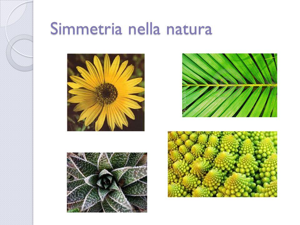 Simmetria nella natura