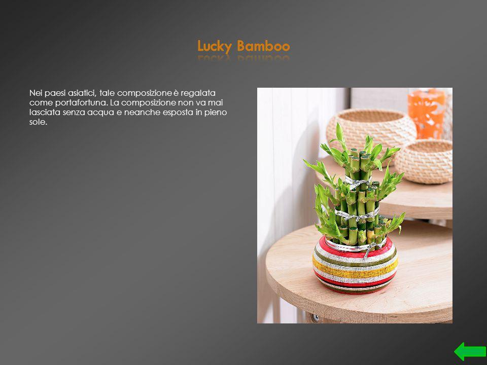 ll suo nome è Dypsis lutescens. E' tra le piante da appartamento più apprezzate e conosciute.