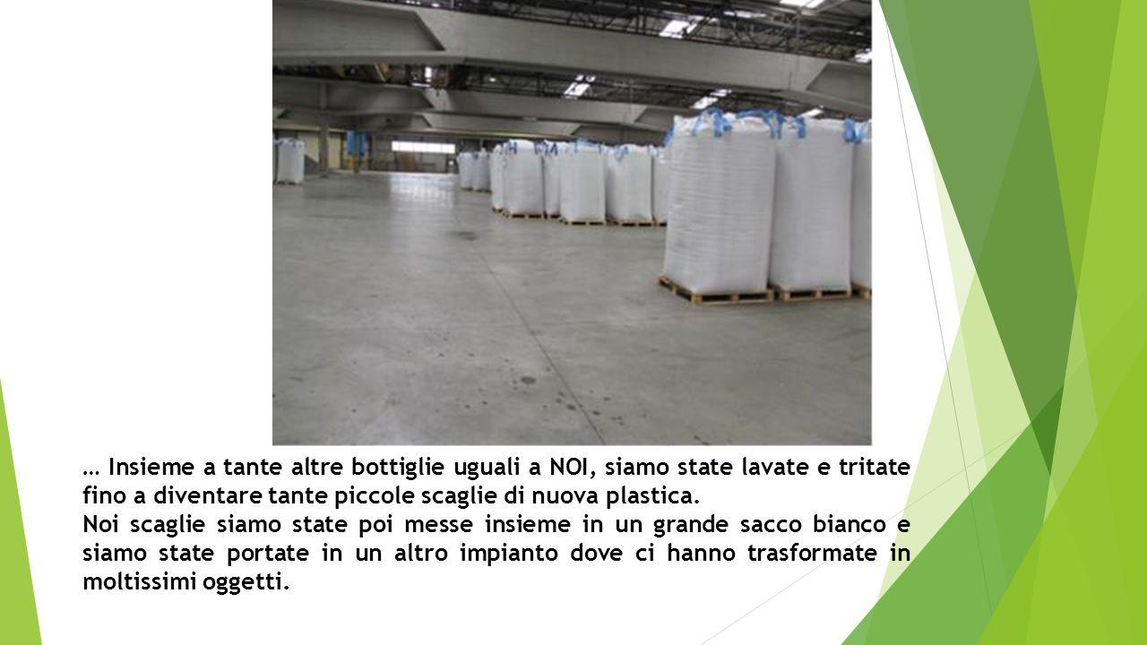 … Insieme a tante altre bottiglie uguali a NOI, siamo state lavate e tritate fino a diventare tante piccole scaglie di nuova plastica.
