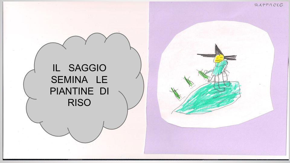IL SAGGIO SEMINA LE PIANTINE DI RISO