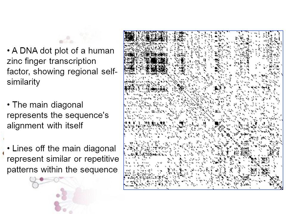 Un metodo molto semplice ed utile per la comparazione di due sequenze è quello della MATRICE DOTPLOT A|X X X T| X X G| X T| X X A T C A C T G T A C| X | | | | | | | A|X X X A T C A - - G T A C| X T| X X A|X X X +------------------- A T C A G T A