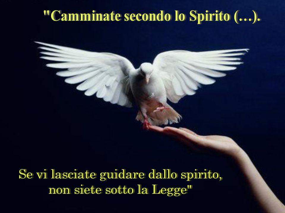 Siamo liberi perché guidati dallo Spirito di Gesù che vive in noi. Da qui l'invito:
