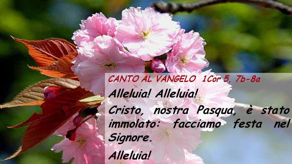 CANTO AL VANGELO 1Cor 5, 7b-8a Alleluia.