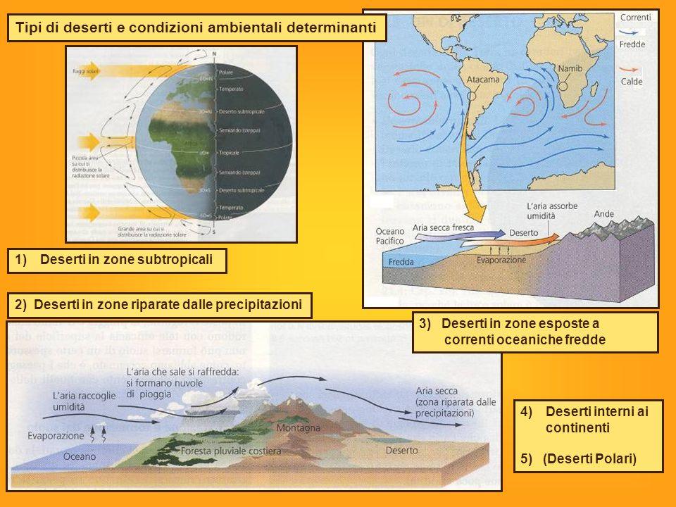 2) Deserti in zone riparate dalle precipitazioni 1)Deserti in zone subtropicali 4)Deserti interni ai continenti 5) (Deserti Polari) 3) Deserti in zone esposte a correnti oceaniche fredde Tipi di deserti e condizioni ambientali determinanti