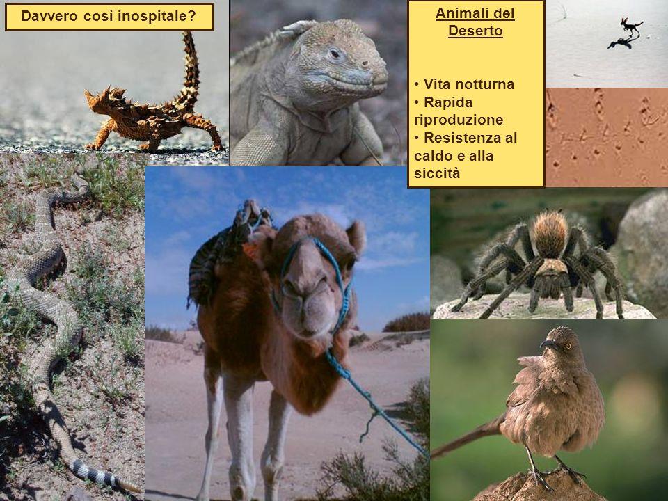 Animali del Deserto Vita notturna Rapida riproduzione Resistenza al caldo e alla siccità Davvero così inospitale?