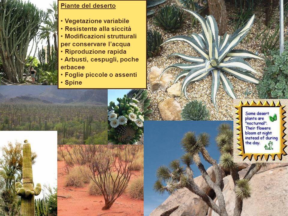 Piante del deserto Vegetazione variabile Resistente alla siccità Modificazioni strutturali per conservare l'acqua Riproduzione rapida Arbusti, cespugli, poche erbacee Foglie piccole o assenti Spine
