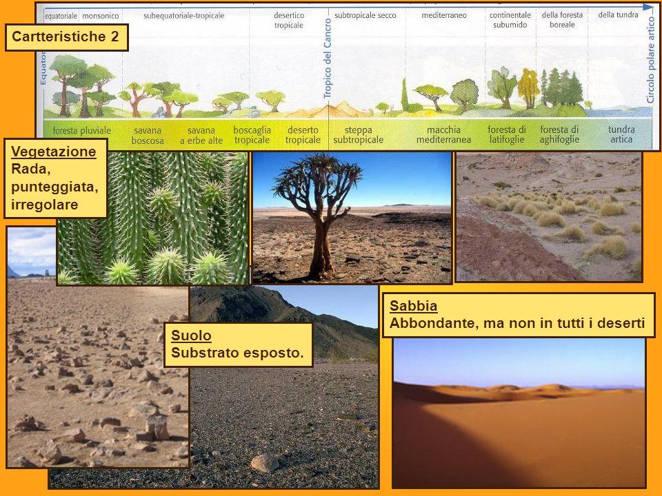 Suolo Substrato esposto. Sabbia Abbondante, ma non in tutti i deserti Vegetazione Rada, punteggiata, irregolare Cartteristiche 2