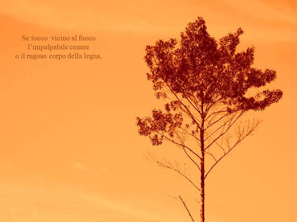 Se tocco vicino al fuoco l'impalpabile cenere o il rugoso corpo della legna,