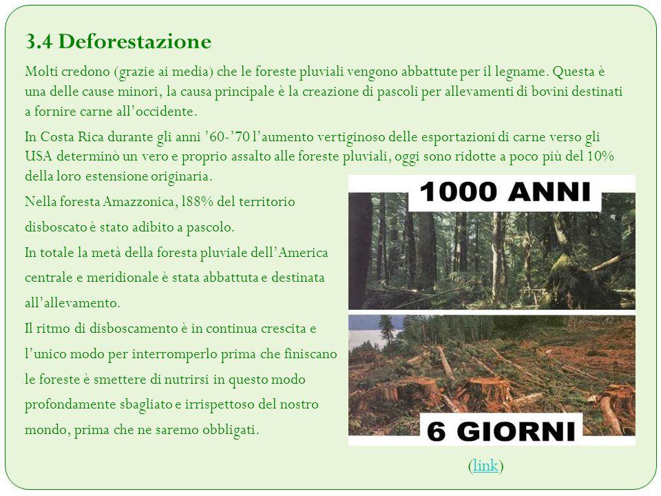 3.4 Deforestazione Molti credono (grazie ai media) che le foreste pluviali vengono abbattute per il legname. Questa è una delle cause minori, la causa