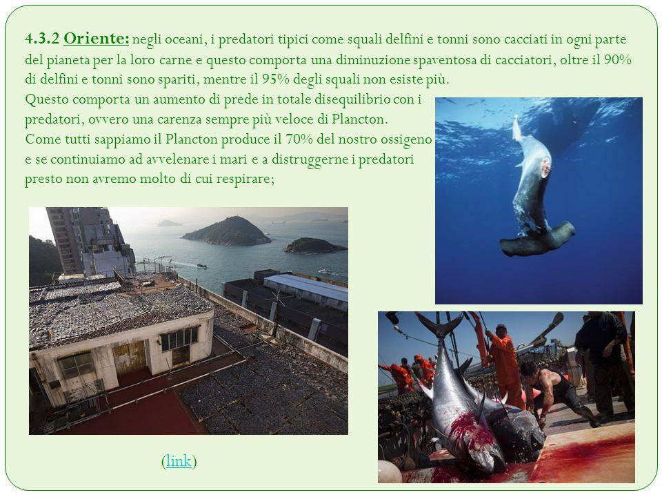 4.3.2 Oriente: negli oceani, i predatori tipici come squali delfini e tonni sono cacciati in ogni parte del pianeta per la loro carne e questo comport
