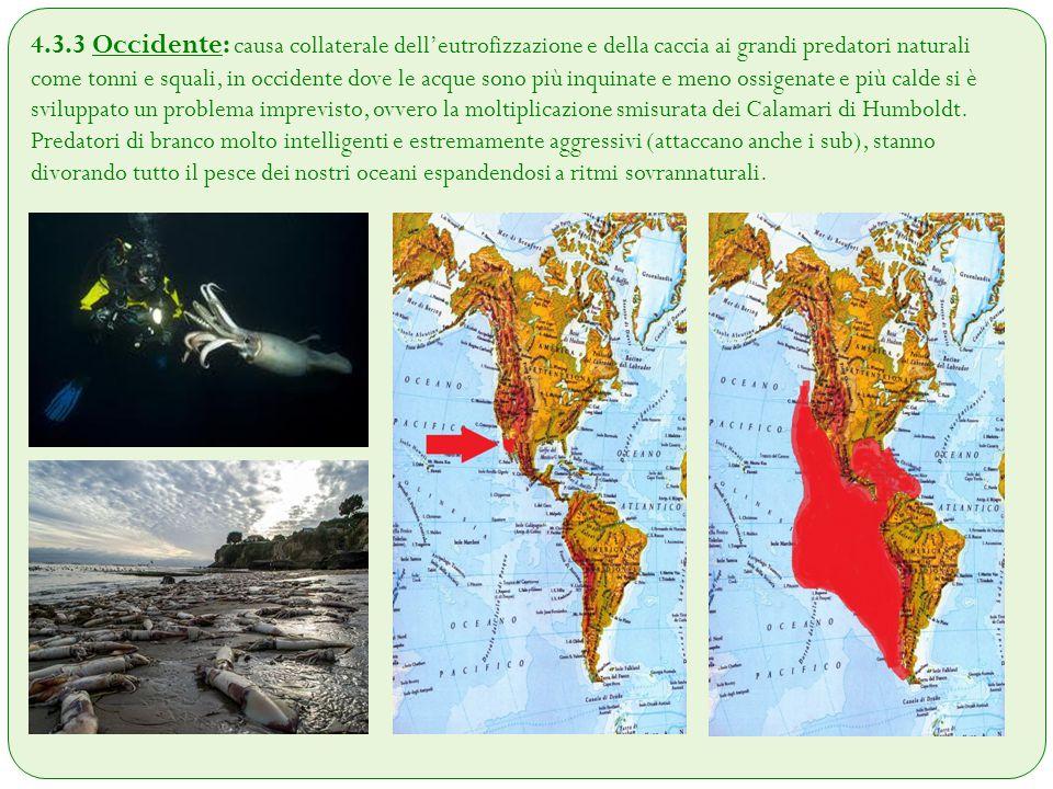 4.3.3 Occidente: causa collaterale dell'eutrofizzazione e della caccia ai grandi predatori naturali come tonni e squali, in occidente dove le acque so
