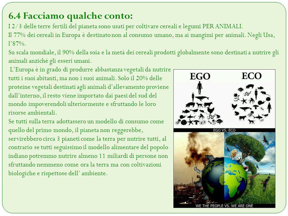 6.4 Facciamo qualche conto: I 2/3 delle terre fertili del pianeta sono usati per coltivare cereali e legumi PER ANIMALI. Il 77% dei cereali in Europa