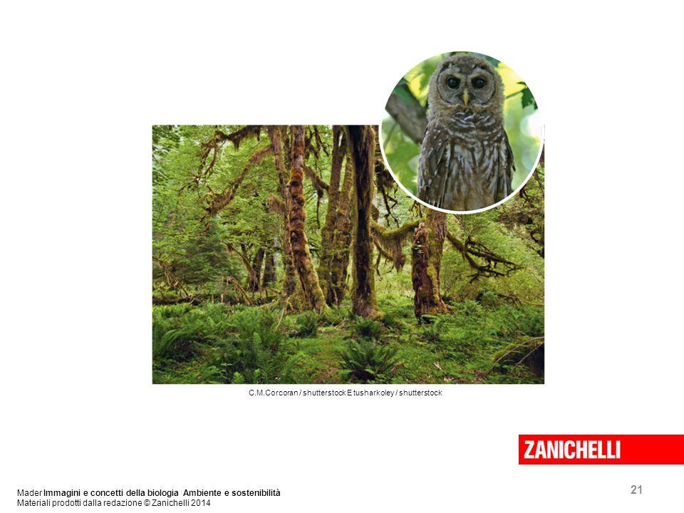 21 Mader Immagini e concetti della biologia Ambiente e sostenibilità Materiali prodotti dalla redazione © Zanichelli 2014 C.M.Corcoran / shutterstock E tusharkoley / shutterstock