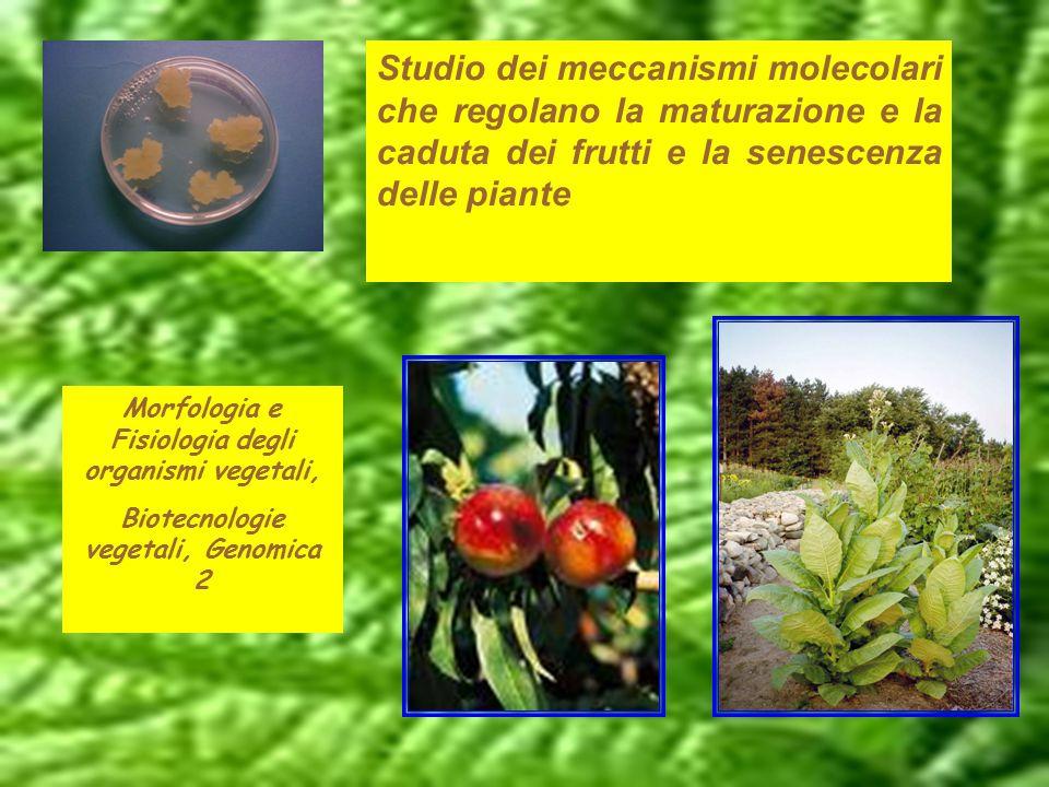 Studio dei meccanismi molecolari che regolano la maturazione e la caduta dei frutti e la senescenza delle piante Morfologia e Fisiologia degli organis