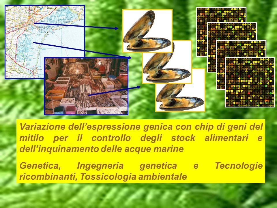 Variazione dell'espressione genica con chip di geni del mitilo per il controllo degli stock alimentari e dell'inquinamento delle acque marine Genetica