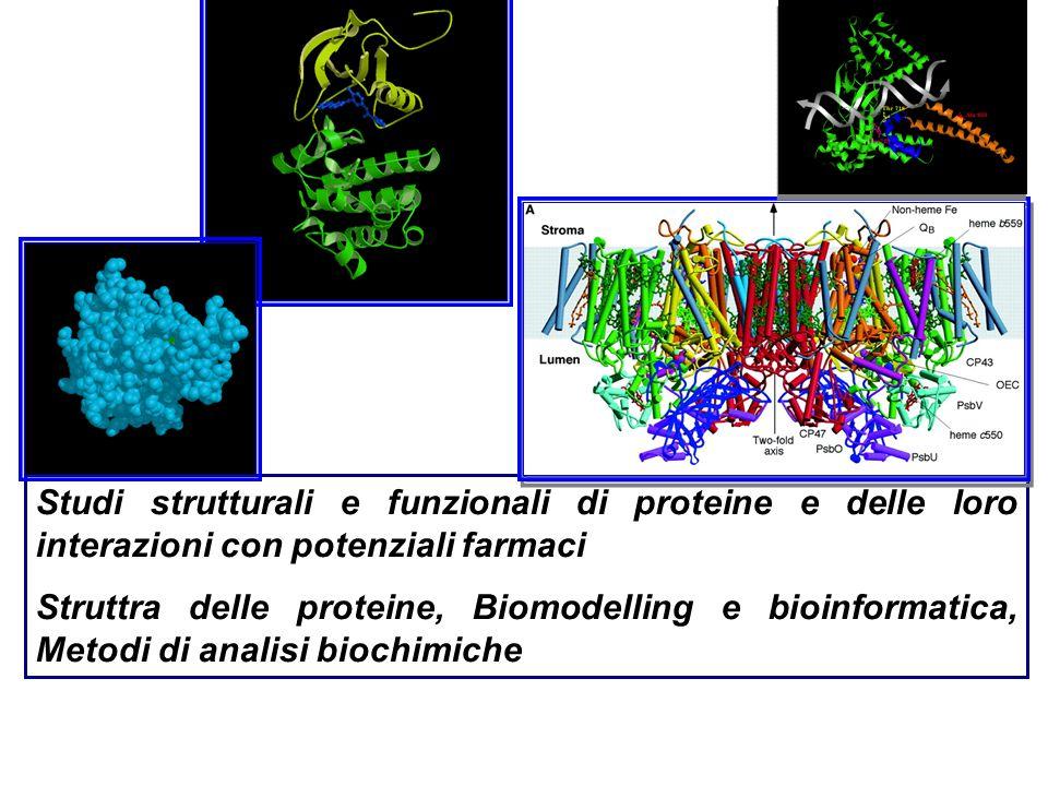 Studi strutturali e funzionali di proteine e delle loro interazioni con potenziali farmaci Struttra delle proteine, Biomodelling e bioinformatica, Met