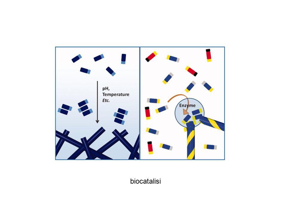 biocatalisi