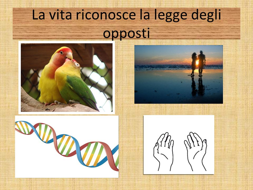 Neuroimaging dell'amore