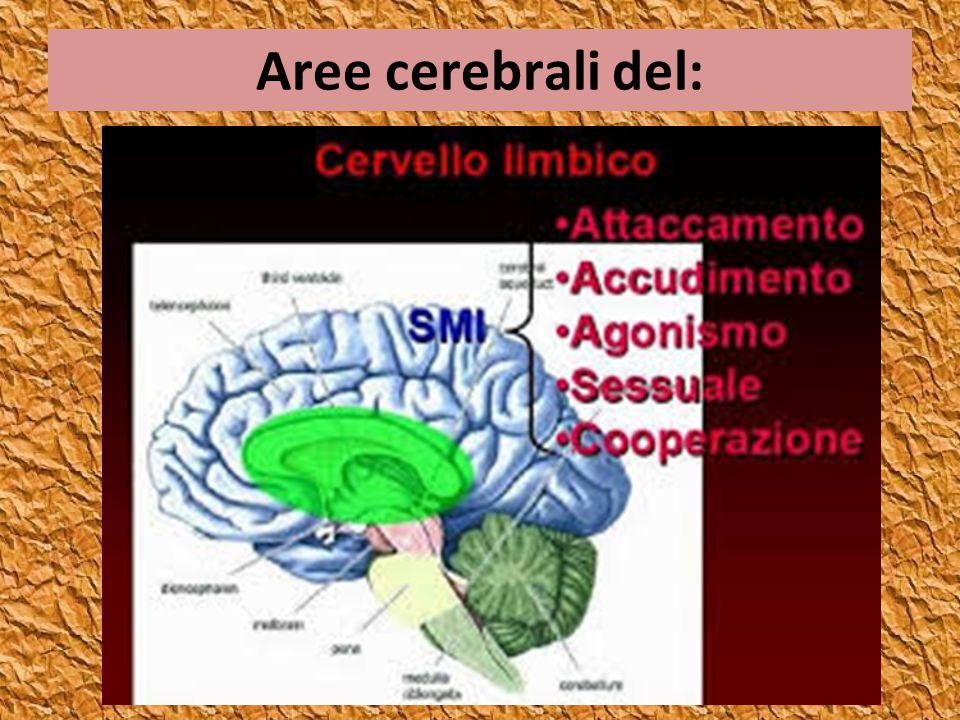 Aree cerebrali del: