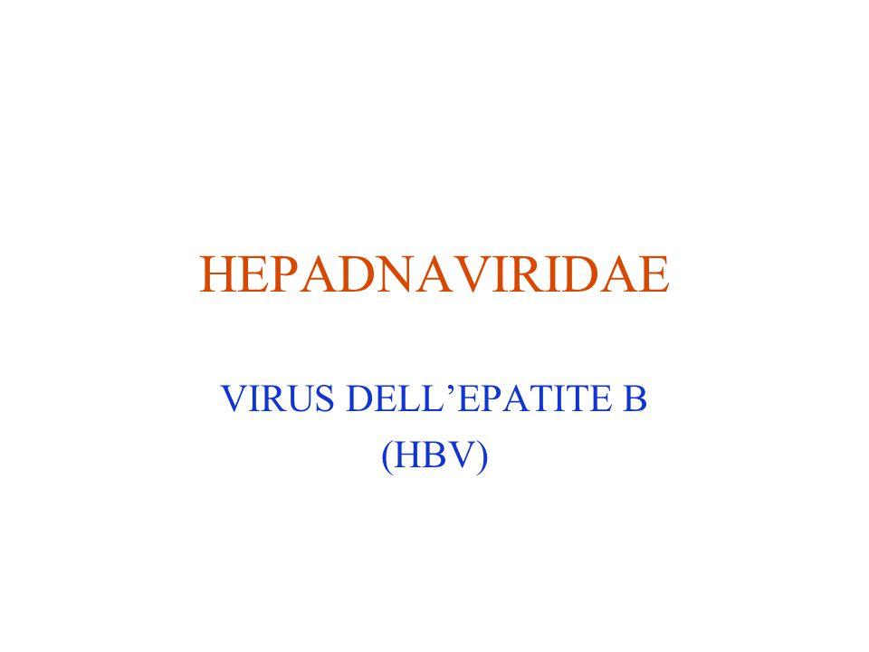 HEPADNAVIRIDAE VIRUS DELL'EPATITE B (HBV)