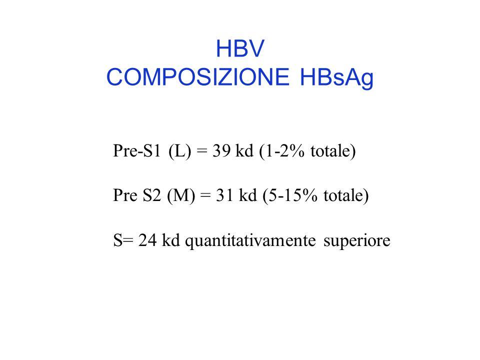 HBV COMPOSIZIONE HBsAg Pre-S1 (L) = 39 kd (1-2% totale) Pre S2 (M) = 31 kd (5-15% totale) S= 24 kd quantitativamente superiore