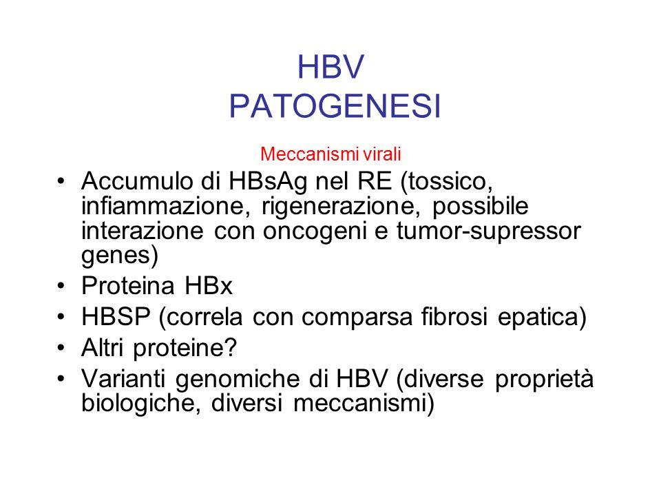 HBV PATOGENESI Meccanismi virali Accumulo di HBsAg nel RE (tossico, infiammazione, rigenerazione, possibile interazione con oncogeni e tumor-supressor genes) Proteina HBx HBSP (correla con comparsa fibrosi epatica) Altri proteine.