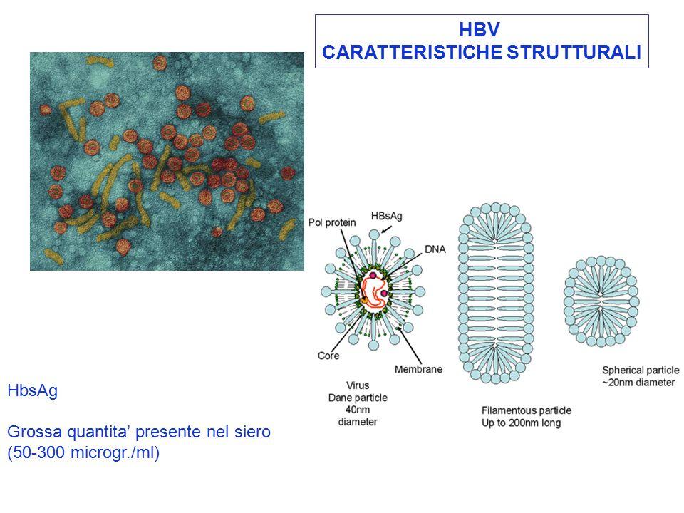 HBV CARATTERISTICHE STRUTTURALI HbsAg Grossa quantita' presente nel siero (50-300 microgr./ml)
