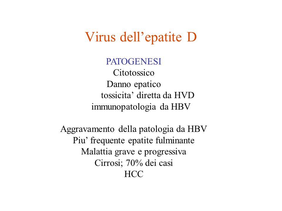 Virus dell'epatite D PATOGENESI Citotossico Danno epatico tossicita' diretta da HVD immunopatologia da HBV Aggravamento della patologia da HBV Piu' frequente epatite fulminante Malattia grave e progressiva Cirrosi; 70% dei casi HCC
