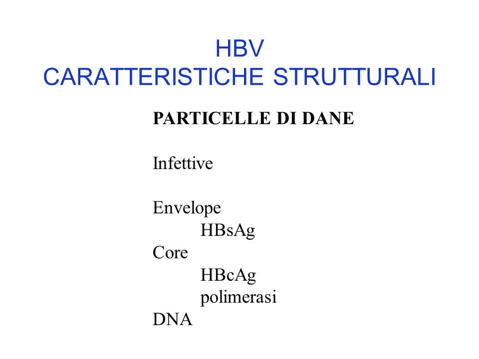 HBV CARATTERISTICHE STRUTTURALI PARTICELLE DI DANE Infettive Envelope HBsAg Core HBcAg polimerasi DNA