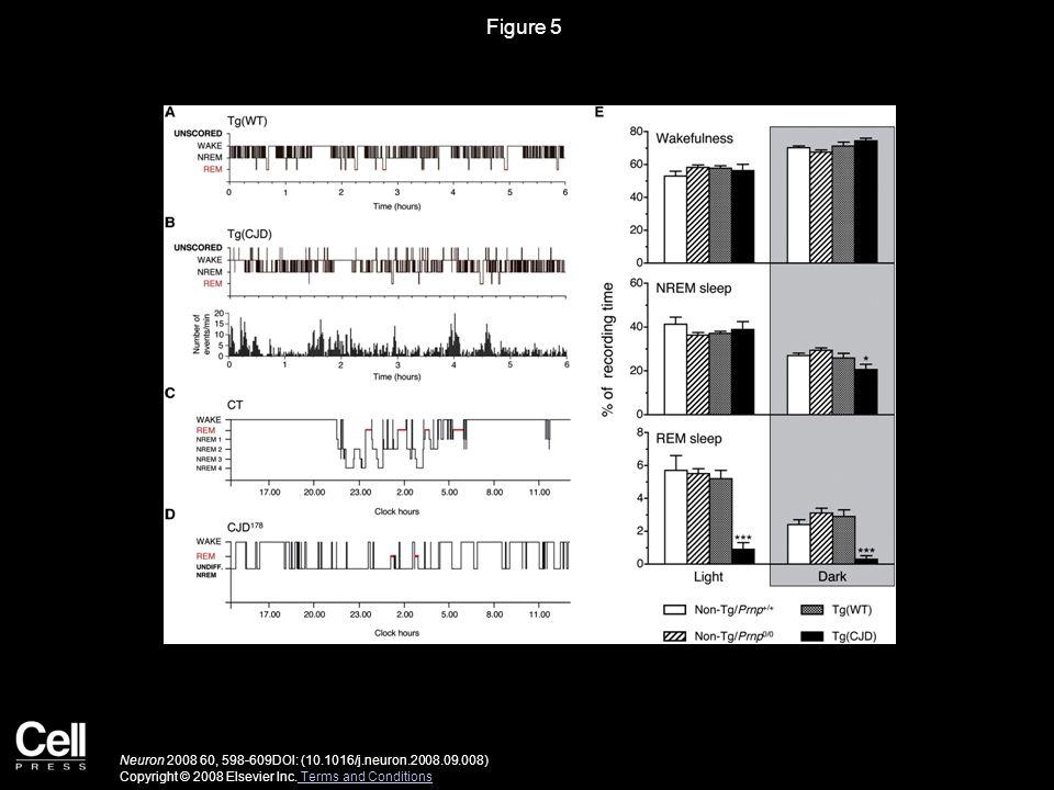 Figure 6 Neuron 2008 60, 598-609DOI: (10.1016/j.neuron.2008.09.008) Copyright © 2008 Elsevier Inc.